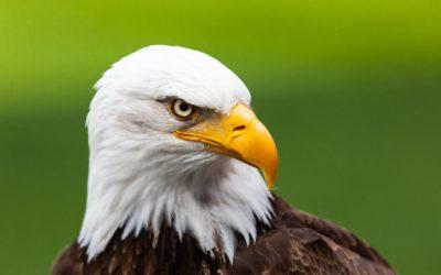 IMG-20190702-WA0000 eagle